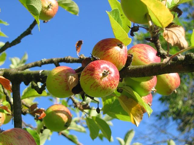 Keď sadíme ovocný stromček