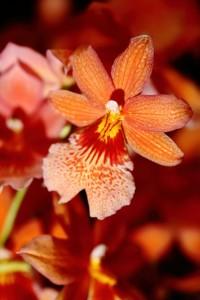 Ako na pestovanie orchideí