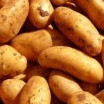 Ako pestovať zemiaky