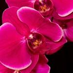 Orchidey - Ako pestovať