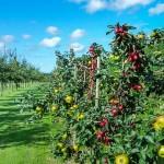 Choroby ovocných stromčekov a chemikálie