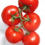 ako si vypestovať paradajky doma