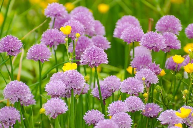 Ako najlepšie a rýchlo upraviť na jar záhradku