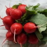 Ako pestovať reďkovky?